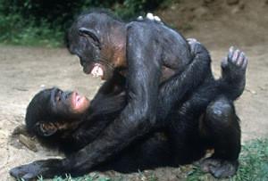 bonobos-400x300